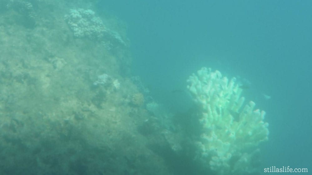 The semi-submarine gets up close to lots of coral and fish