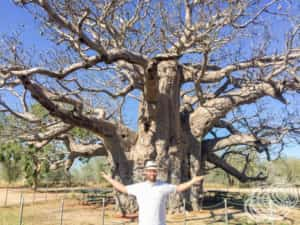 On the way to Derby we passed this huge boab tree in Nyikina Country.