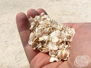 Shells everywhere!