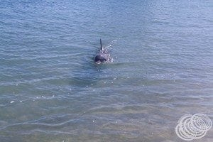 Yay here comes a dolphin!
