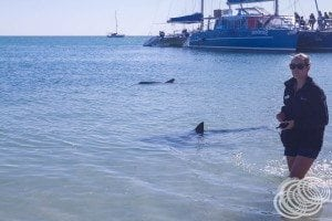 One of the researchers with two of the dolphins that came to say hi.