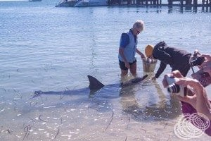 One lucky person getting to hand feed this dolphin