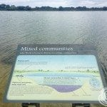 A little bit of information about the microbial communities of Lake Thetis