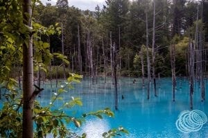 Shirogane Blue Pond is one of the gems you will find in this itinerary.