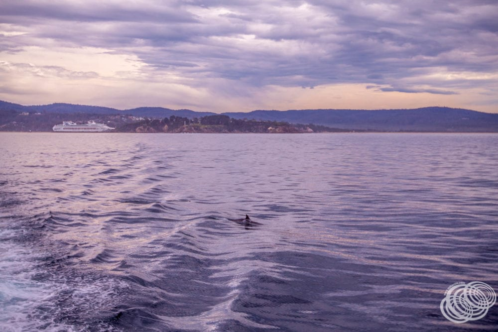 Dolphins joined us on our way out of Twofold Bay.