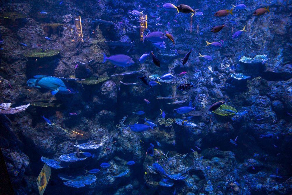 Up close with the Deep Reef Tank