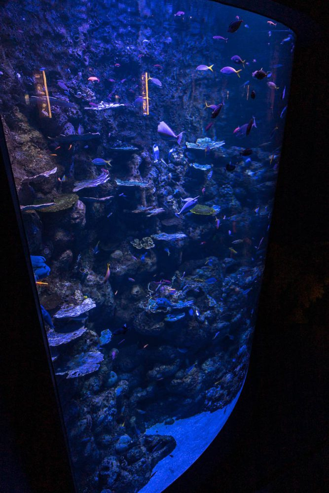 Looking down at the Deep Reef Tank from the upper level