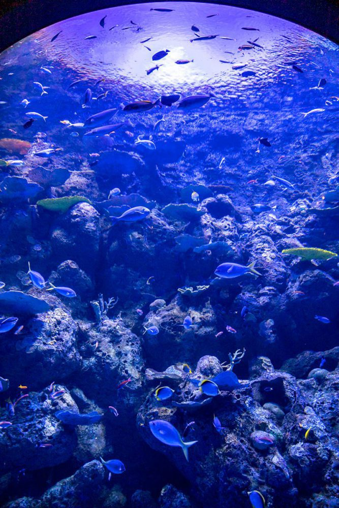 Looking up at the Deep Reef Lower at Cairns Aquarium